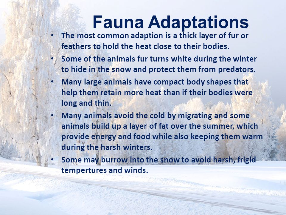 Fauna Adaptations The most common adaption is a thick layer of fur or feathers to hold the heat close to their bodies.