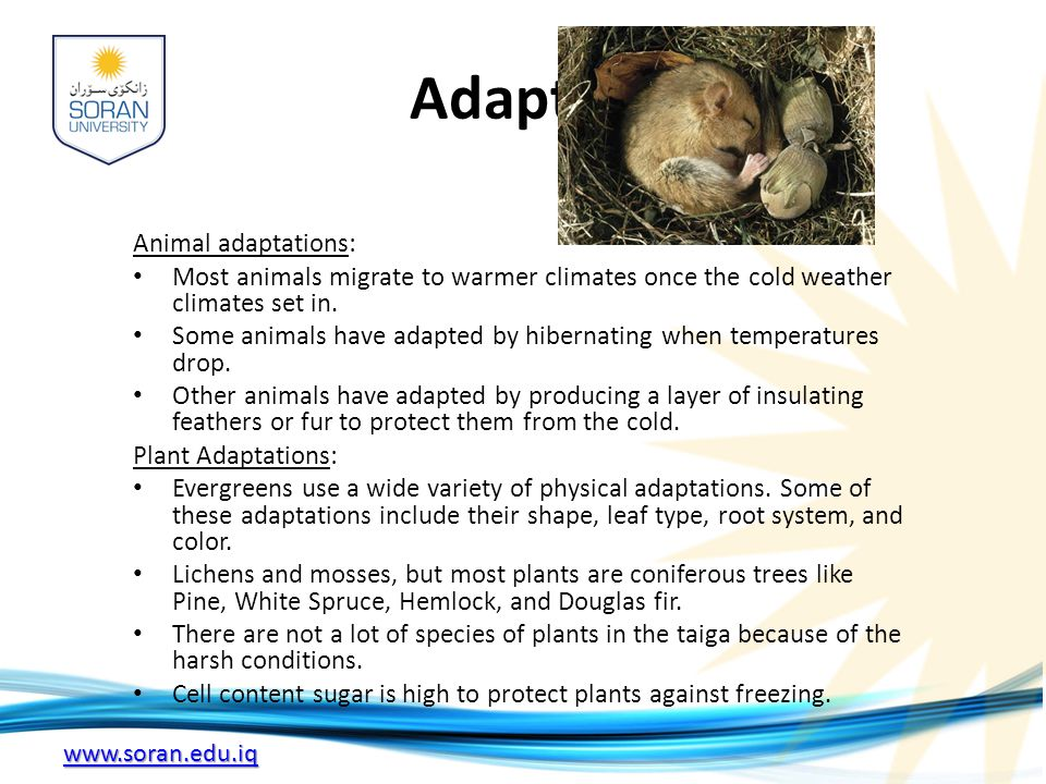 Adaptations Animal adaptations: