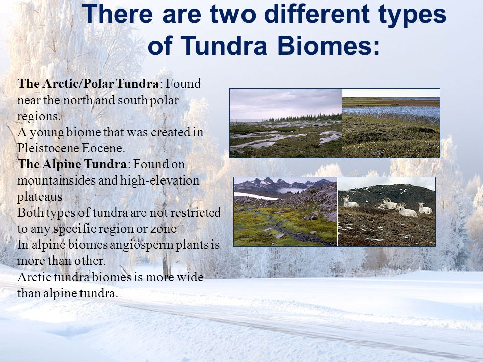 There are two different types of Tundra Biomes: