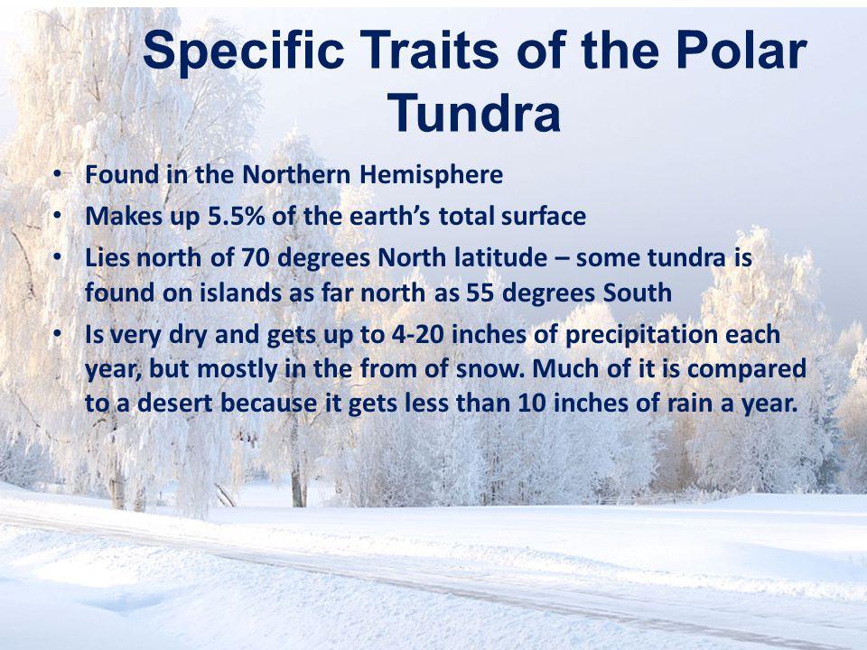 Specific Traits of the Polar Tundra