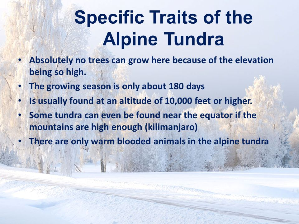 Specific Traits of the Alpine Tundra