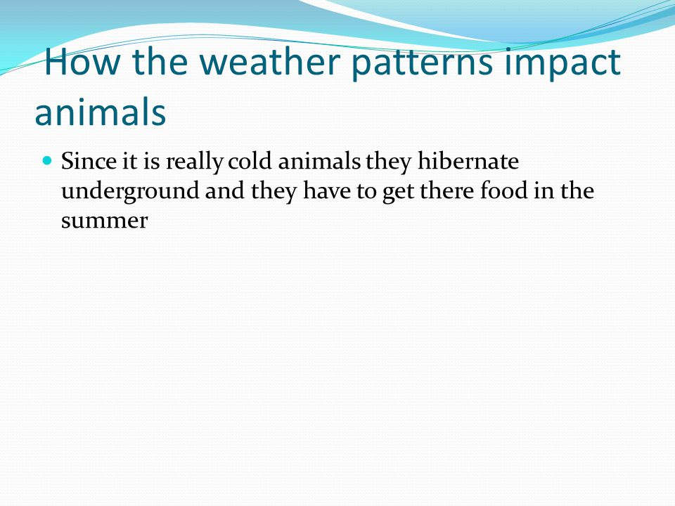How the weather patterns impact animals