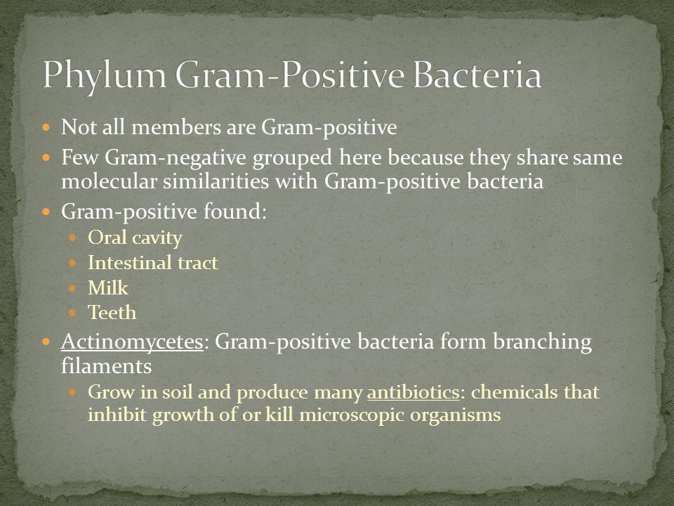 Phylum Gram-Positive Bacteria