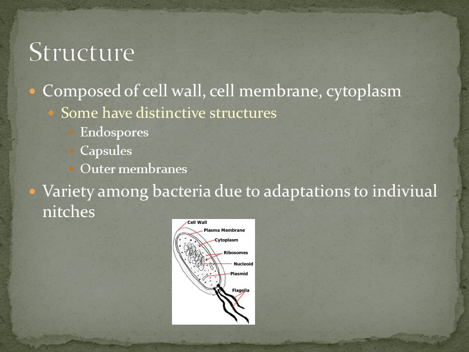 Structure Composed of cell wall, cell membrane, cytoplasm