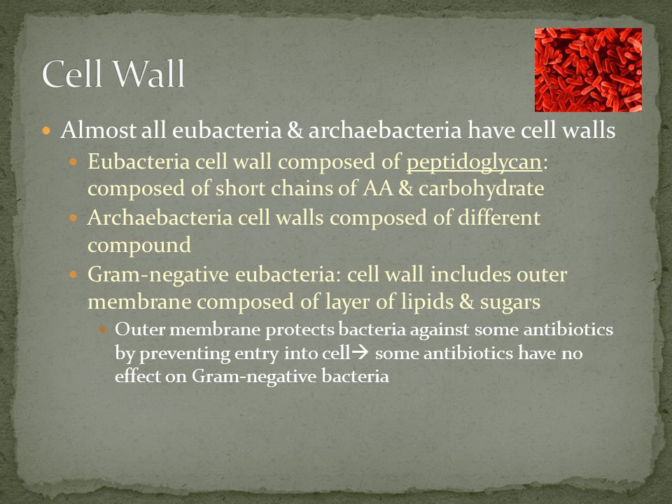 Cell Wall Almost all eubacteria & archaebacteria have cell walls