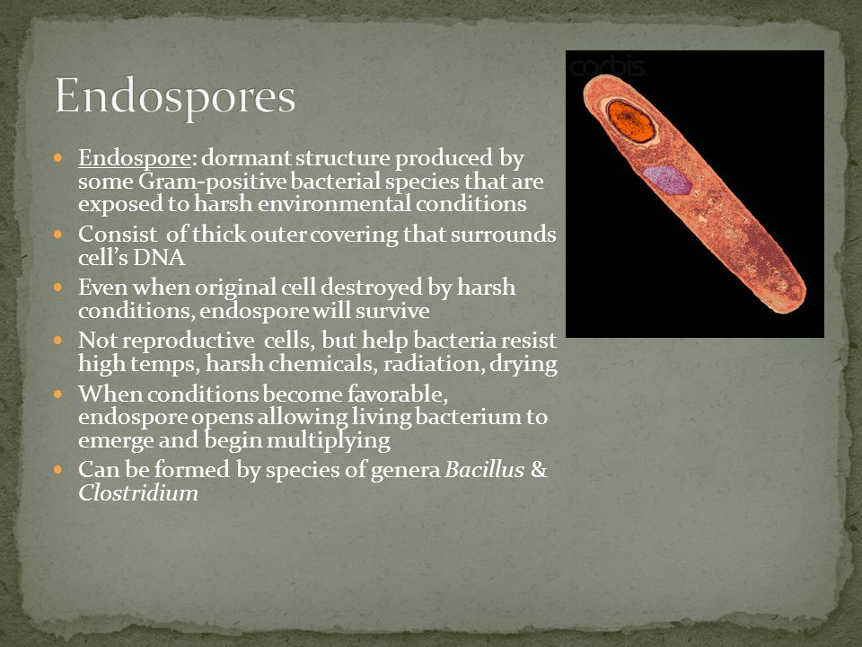 Endospores Endospore: dormant structure produced by some Gram-positive bacterial species that are exposed to harsh environmental conditions.