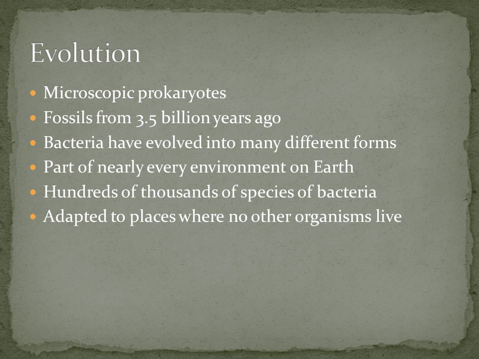 Evolution Microscopic prokaryotes Fossils from 3.5 billion years ago