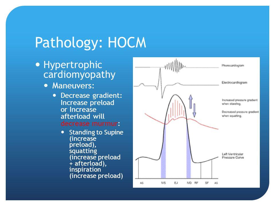 Pathology: HOCM Hypertrophic cardiomyopathy Maneuvers: