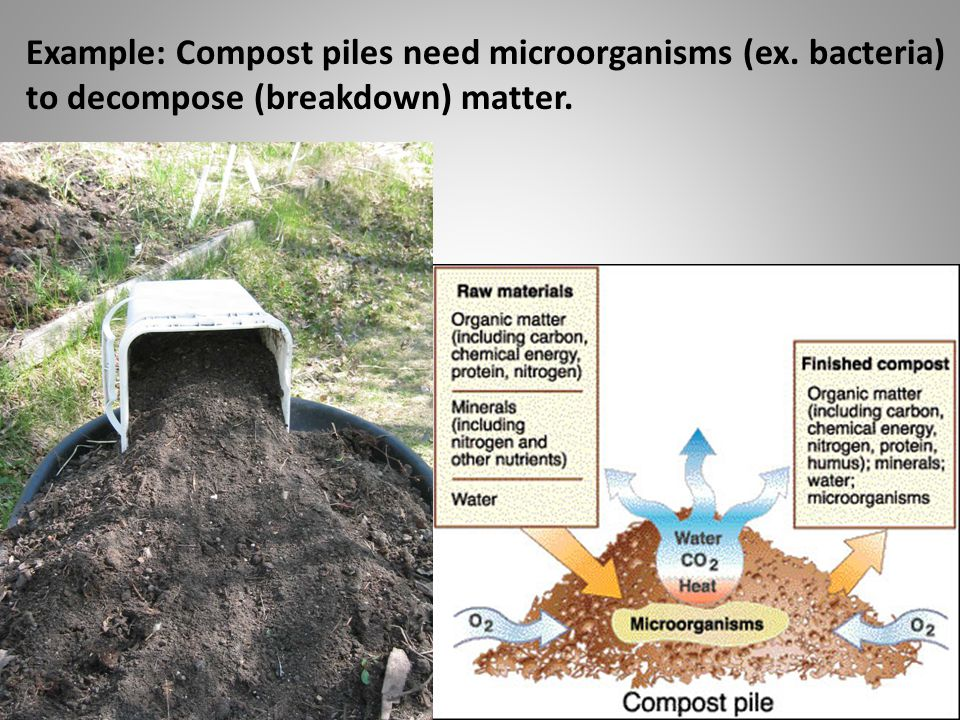 Example: Compost piles need microorganisms (ex