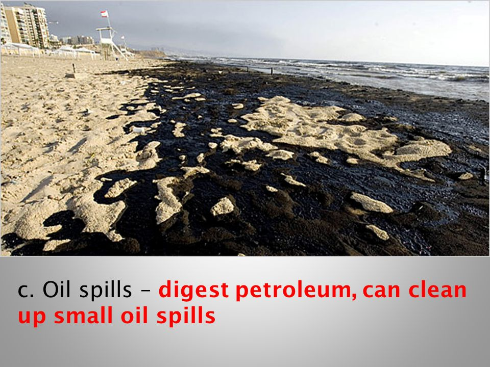c. Oil spills – digest petroleum, can clean up small oil spills