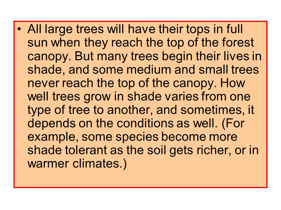 All large trees will have their tops in full sun when they reach the top of the forest canopy.