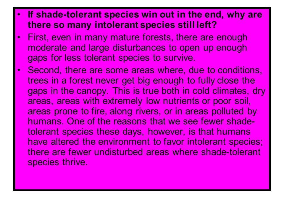 If shade-tolerant species win out in the end, why are there so many intolerant species still left