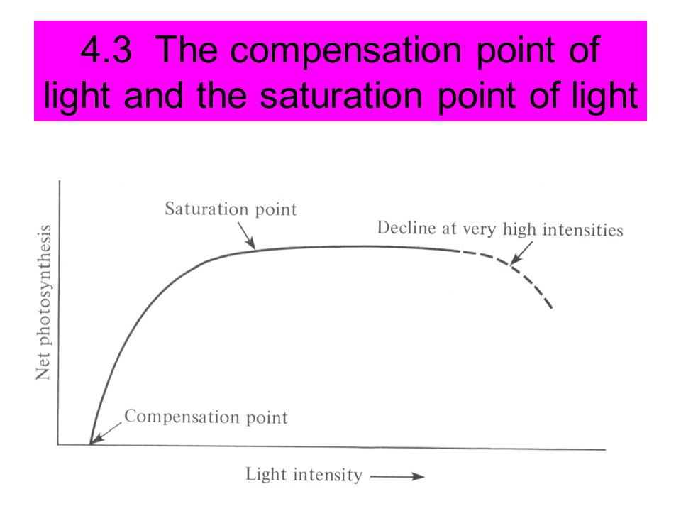 4.3 The compensation point of light and the saturation point of light