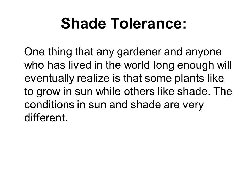 Shade Tolerance: