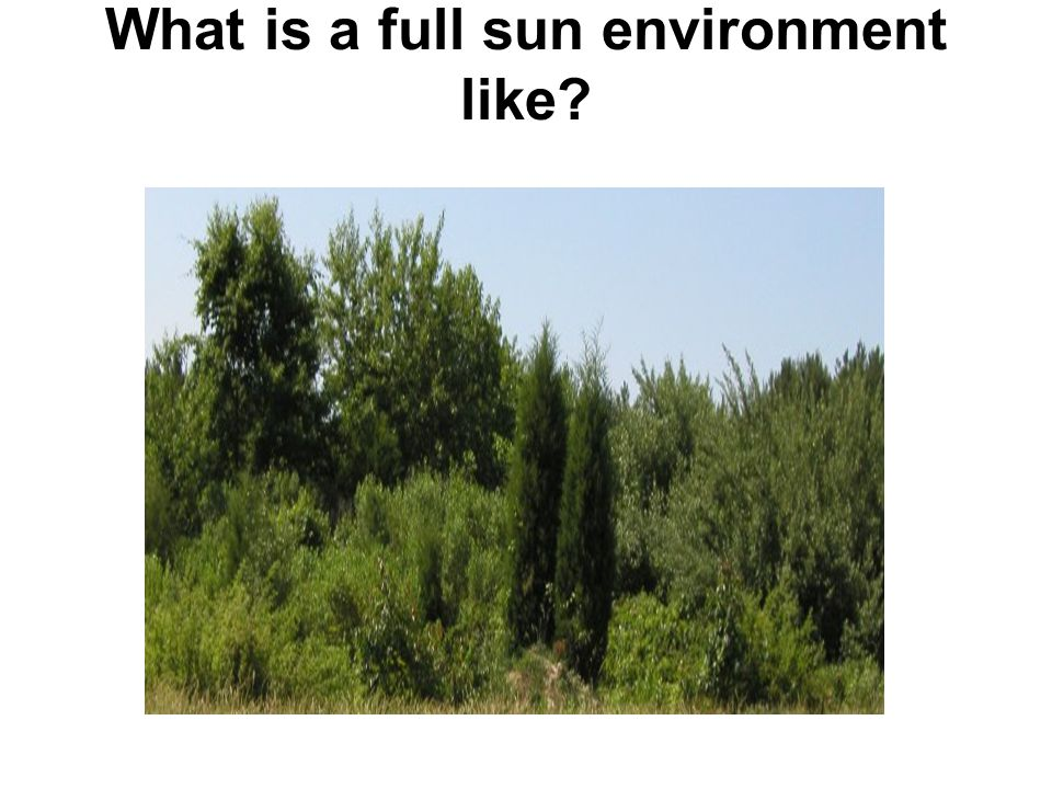 What is a full sun environment like
