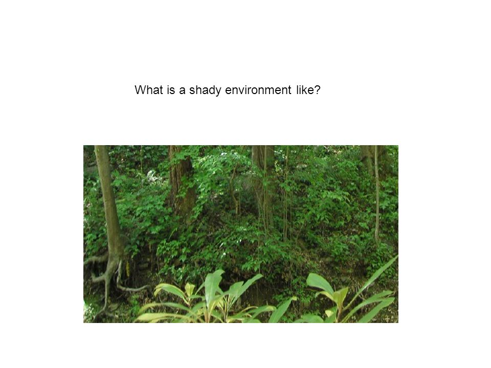 What is a shady environment like