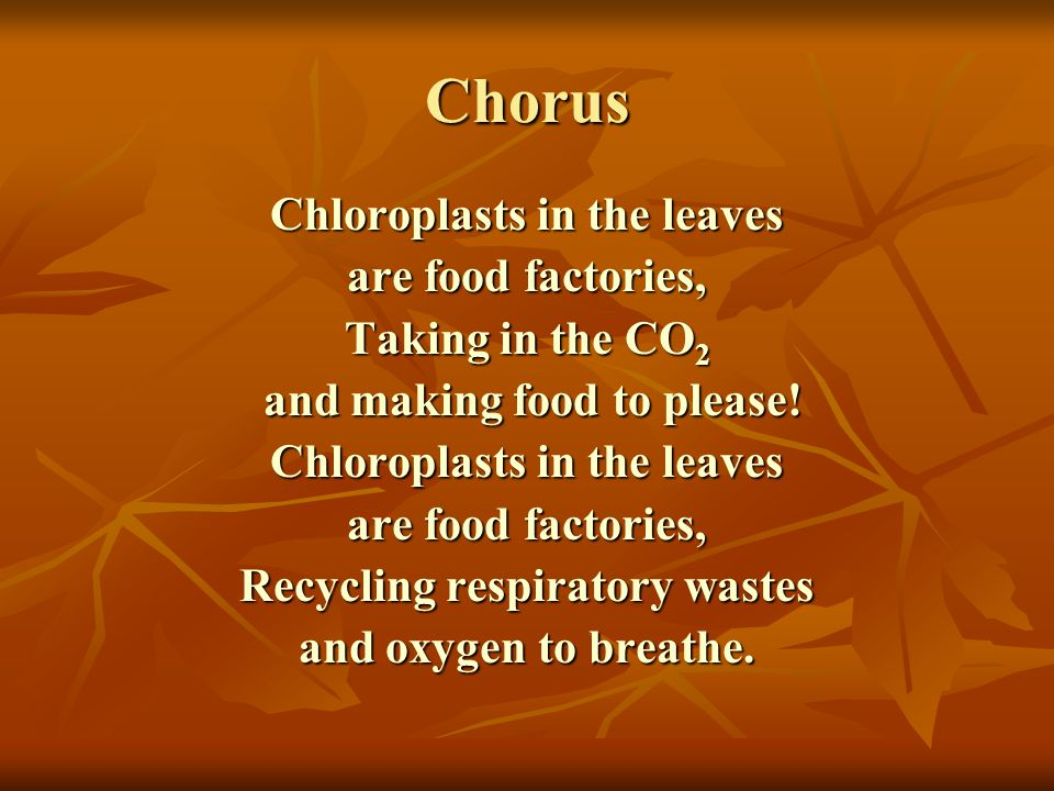 Chorus Chloroplasts in the leaves are food factories,