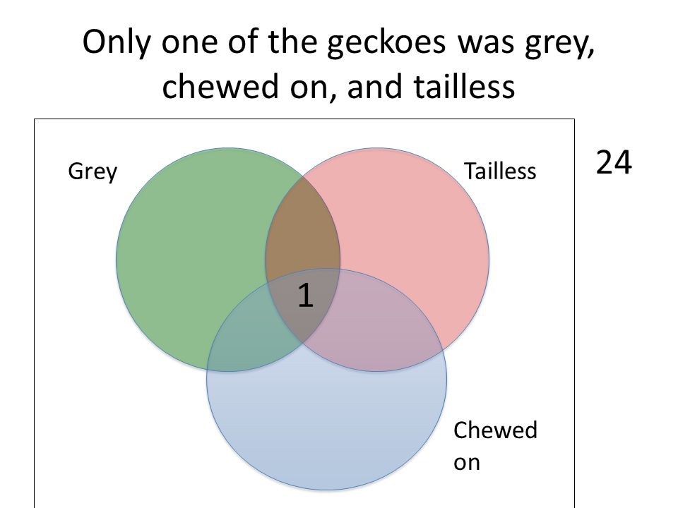 Only one of the geckoes was grey, chewed on, and tailless