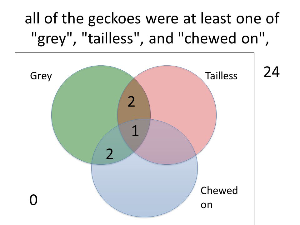 all of the geckoes were at least one of grey , tailless , and chewed on ,