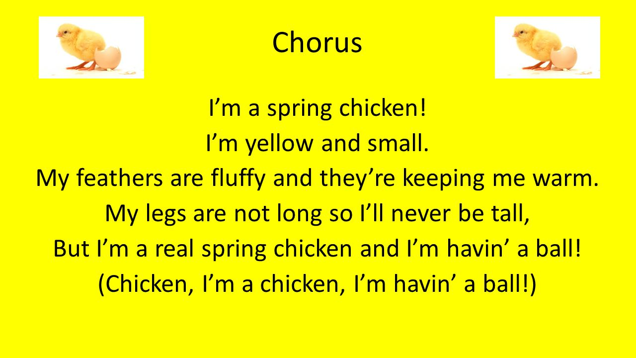 Chorus I'm a spring chicken! I'm yellow and small.