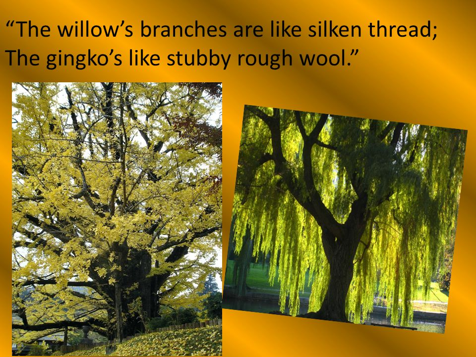 The willow's branches are like silken thread;