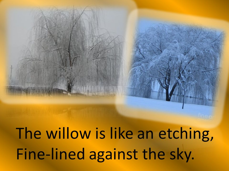 The willow is like an etching,