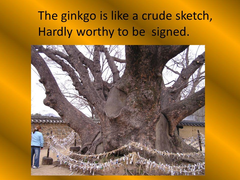 The ginkgo is like a crude sketch,