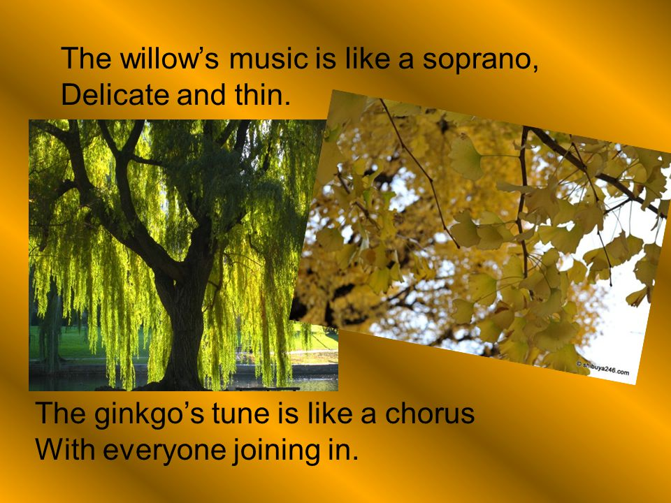 The willow's music is like a soprano,