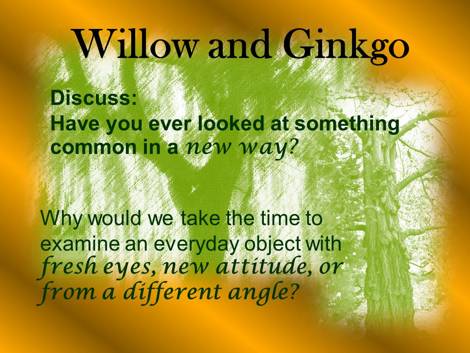 Willow and Ginkgo Discuss: