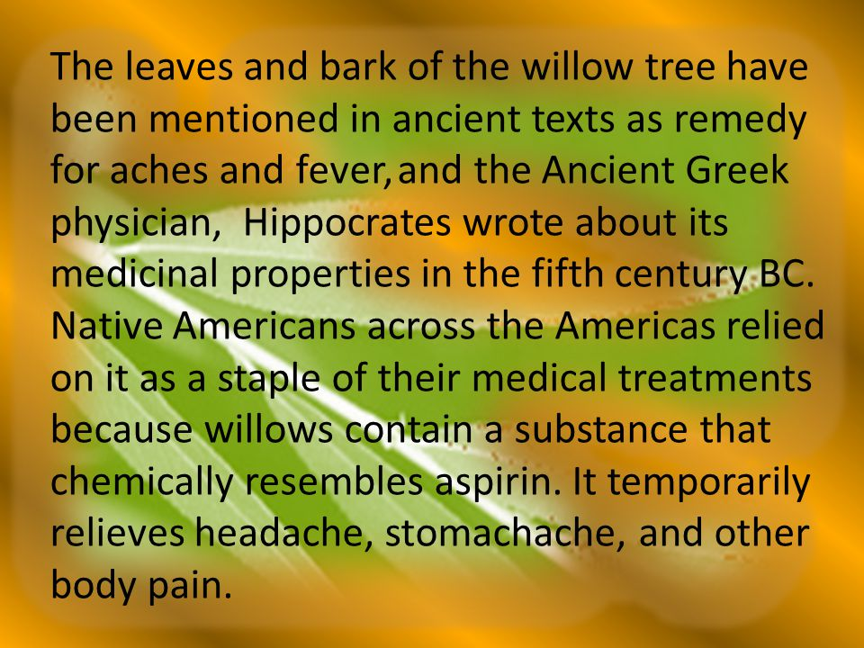 The leaves and bark of the willow tree have been mentioned in ancient texts as remedy for aches and fever, and the Ancient Greek physician, Hippocrates wrote about its medicinal properties in the fifth century BC.