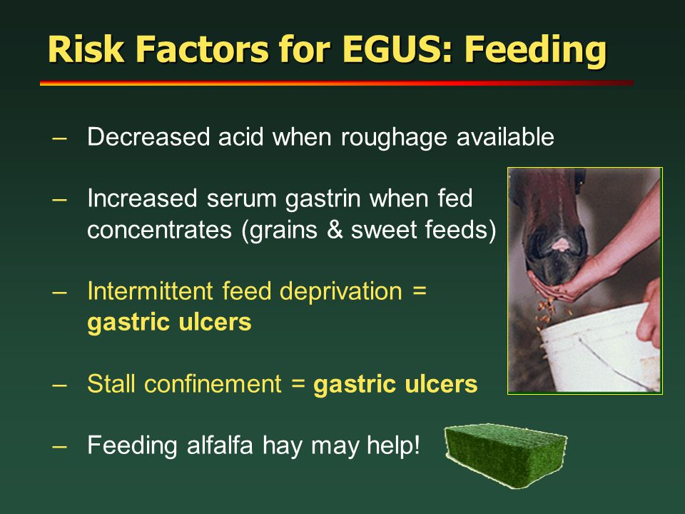 Risk Factors for EGUS: Feeding