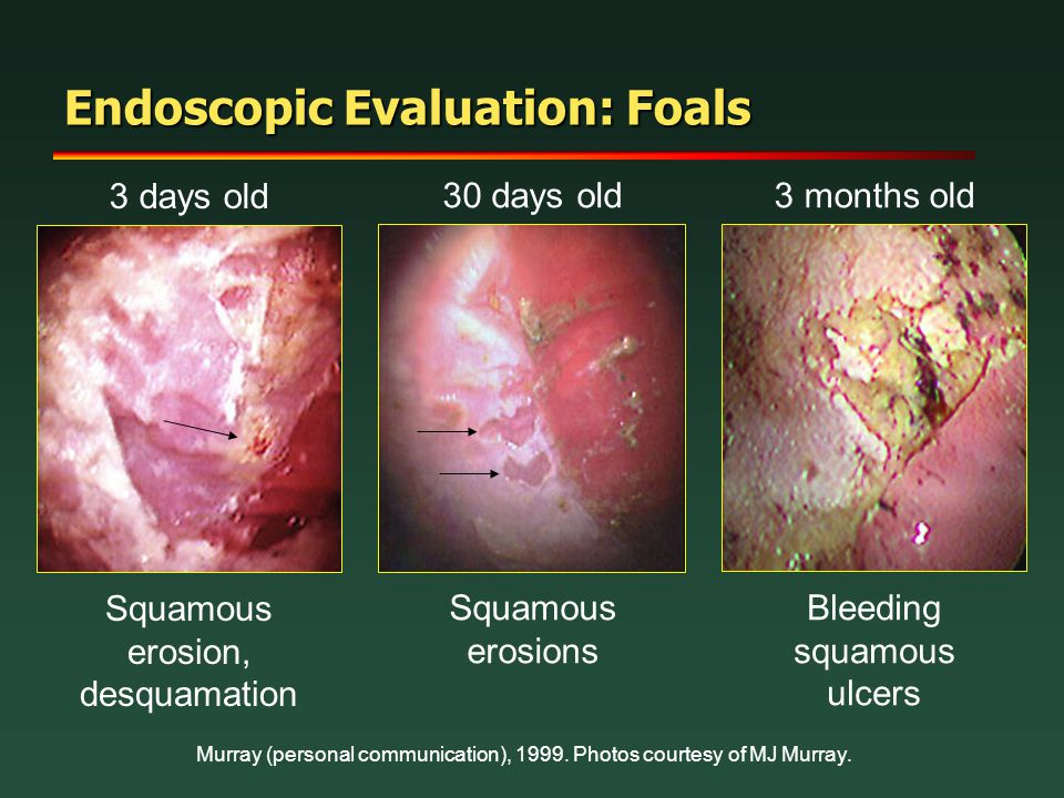 Endoscopic Evaluation: Foals