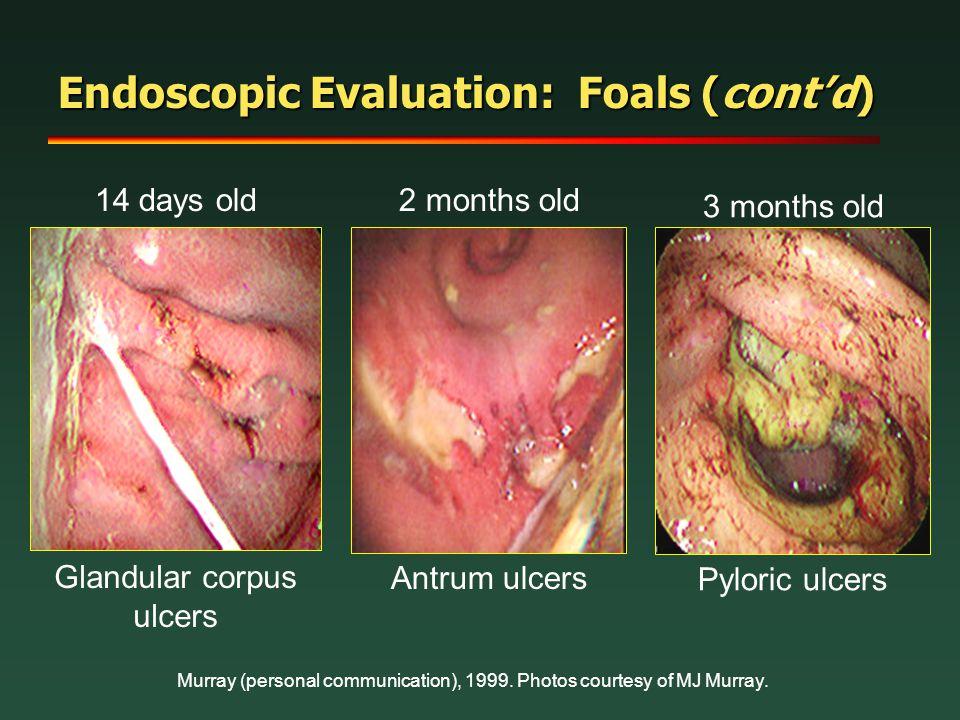 Endoscopic Evaluation: Foals (cont'd)
