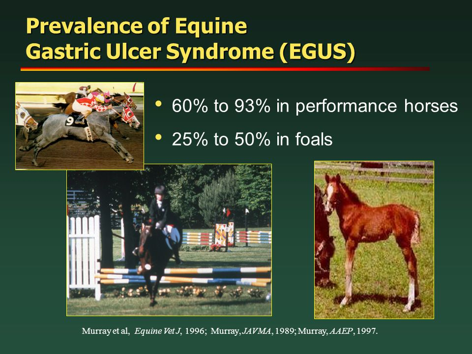 Prevalence of Equine Gastric Ulcer Syndrome (EGUS)