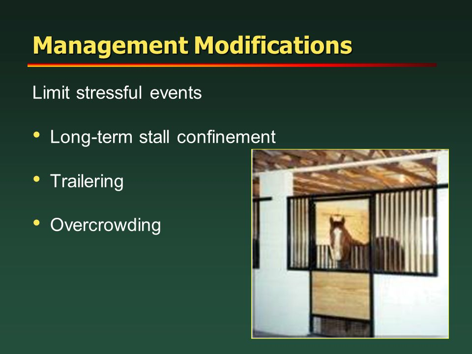 Management Modifications