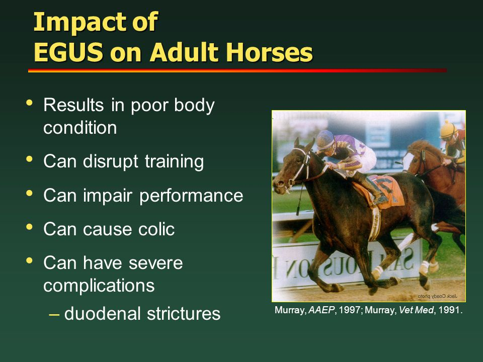 Impact of EGUS on Adult Horses