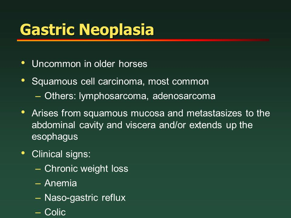 Gastric Neoplasia Uncommon in older horses