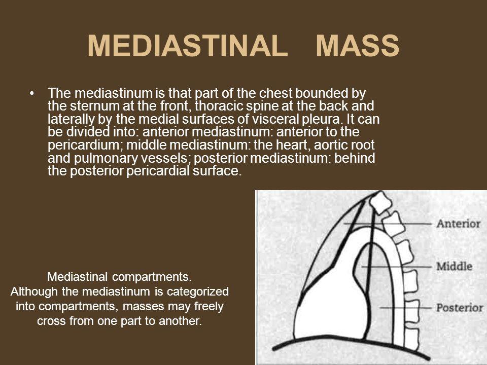 Mediastinal compartments.