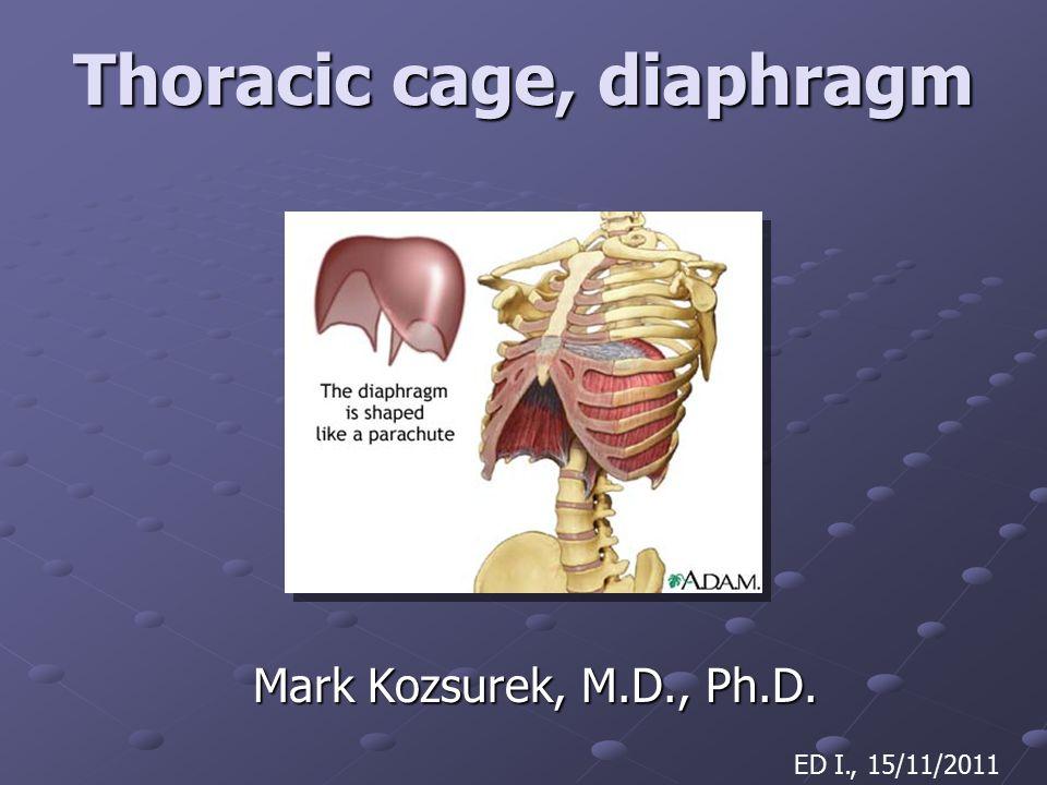 Thoracic cage, diaphragm