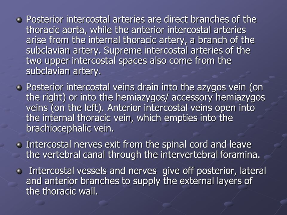 Posterior intercostal arteries are direct branches of the thoracic aorta, while the anterior intercostal arteries arise from the internal thoracic artery, a branch of the subclavian artery. Supreme intercostal arteries of the two upper intercostal spaces also come from the subclavian artery.