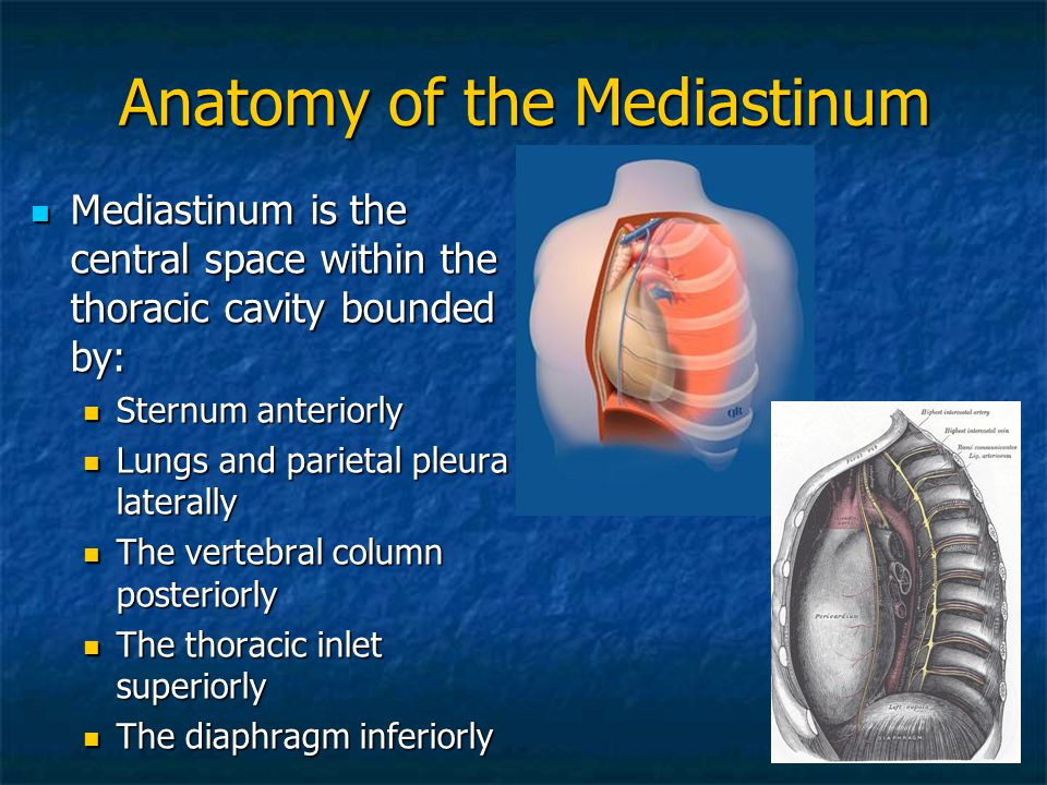 Anatomy of the Mediastinum