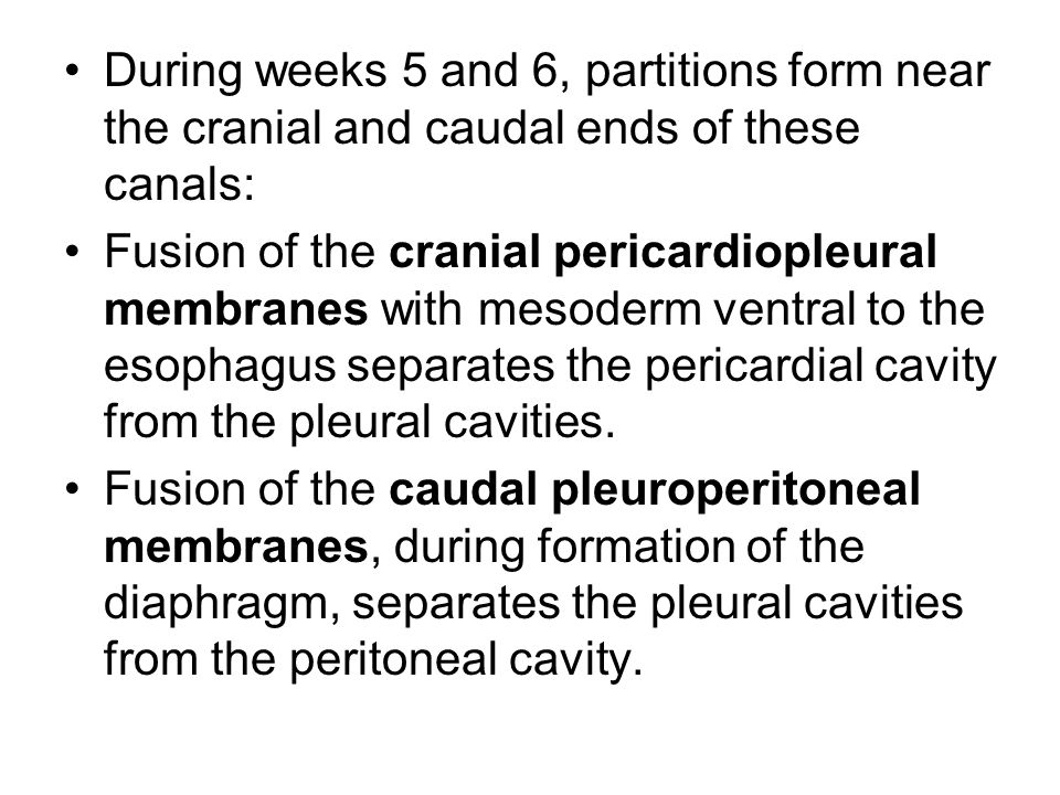 During weeks 5 and 6, partitions form near the cranial and caudal ends of these canals: