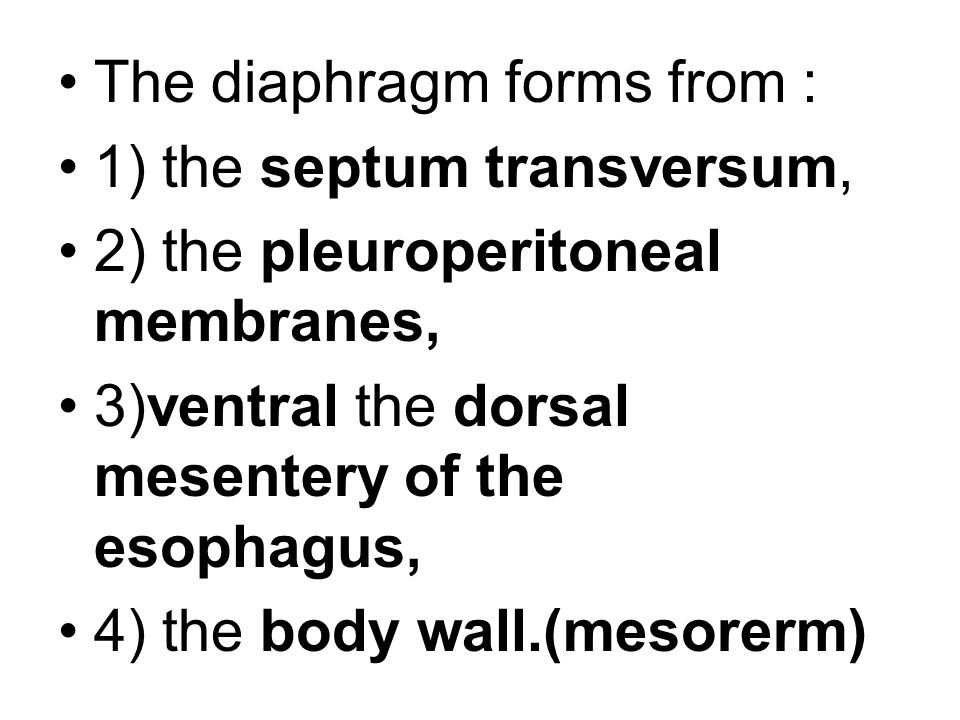 The diaphragm forms from :