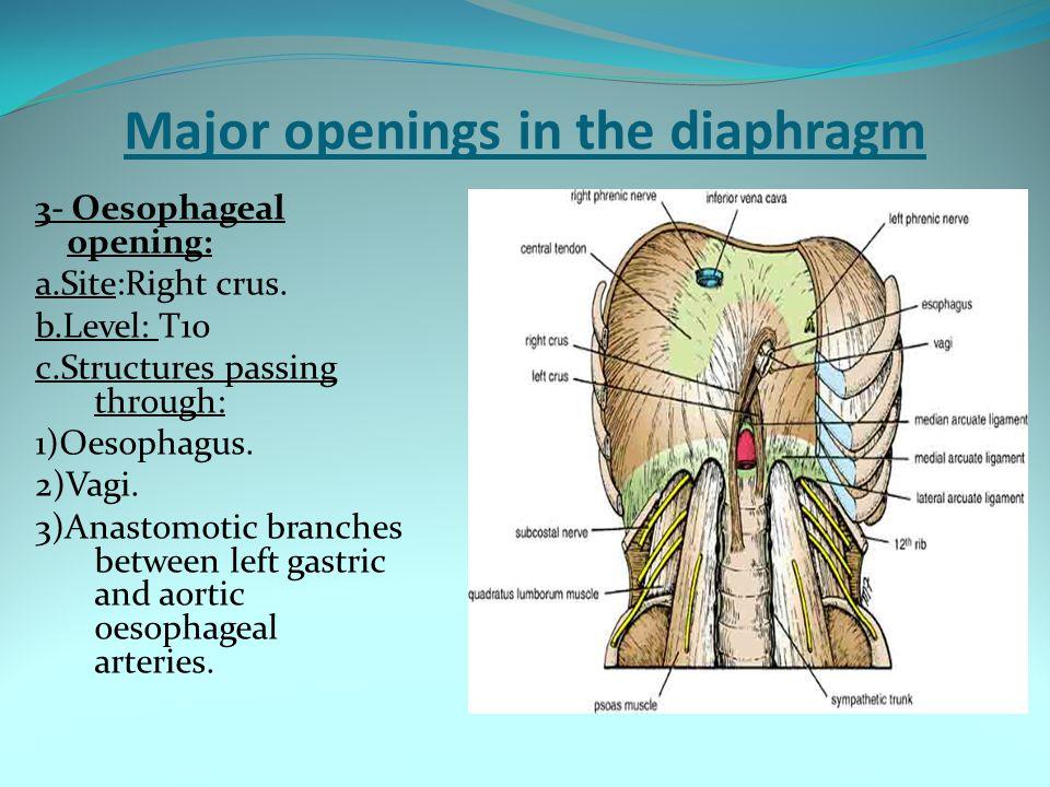 Major openings in the diaphragm