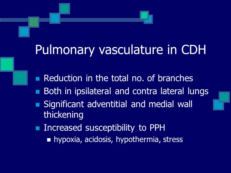 Pulmonary vasculature in CDH