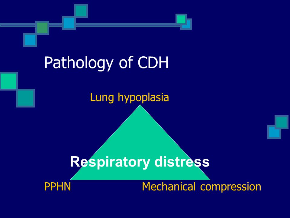 Pathology of CDH Respiratory distress Lung hypoplasia