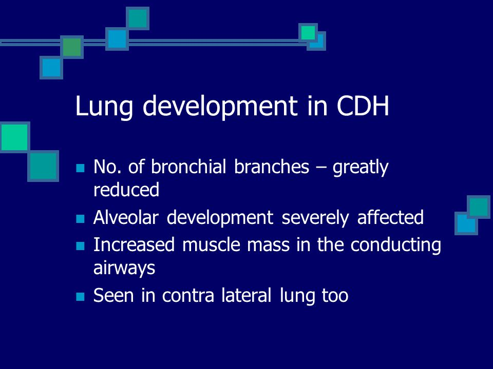 Lung development in CDH
