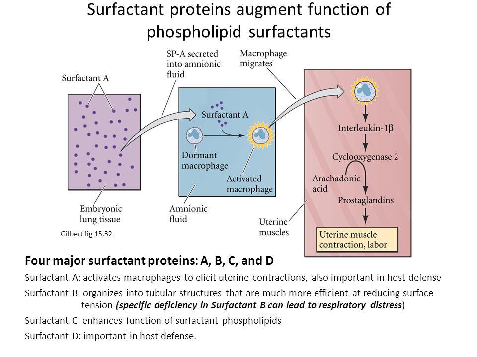 Surfactant proteins augment function of phospholipid surfactants