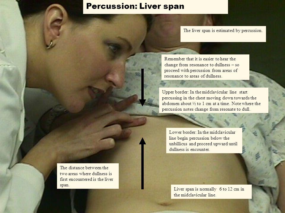 Percussion: Liver span