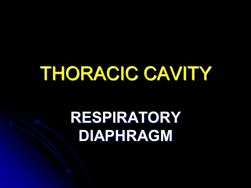 RESPIRATORY DIAPHRAGM
